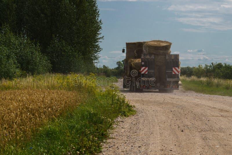 Un grande trattore porta i rotoli asciutti del fieno lungo una strada campestre immagine stock