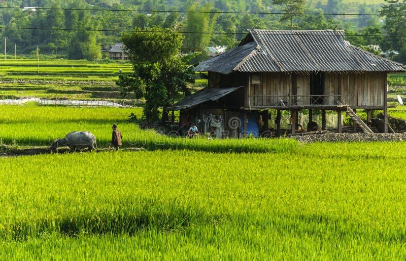 Un granjero en campo del arroz en Vietnam imagenes de archivo