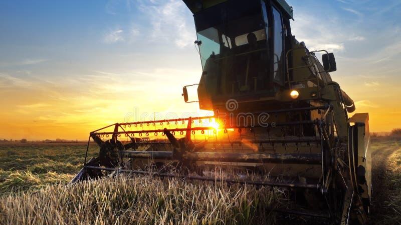 Un granjero en una máquina segadora imagen de archivo libre de regalías