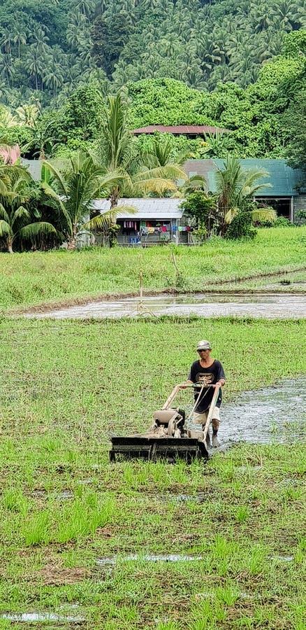 Un granjero filipino que trabaja difícilmente en su arroz de arroz imagenes de archivo