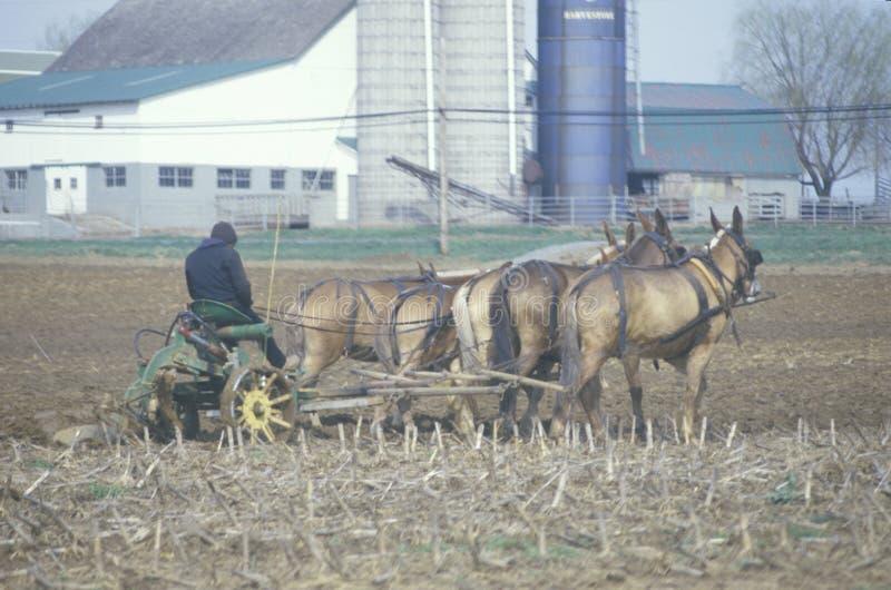 Un granjero y un caballo que aran los campos imagenes de archivo
