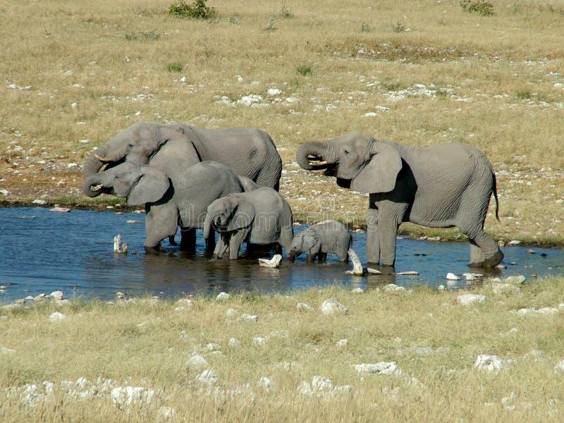 Un gregge dell'elefante fotografia stock libera da diritti