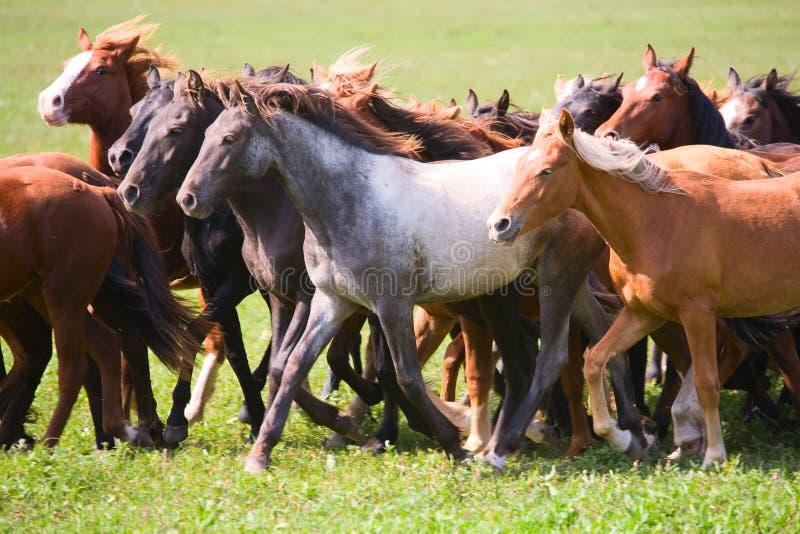 Un gregge di giovani cavalli fotografia stock