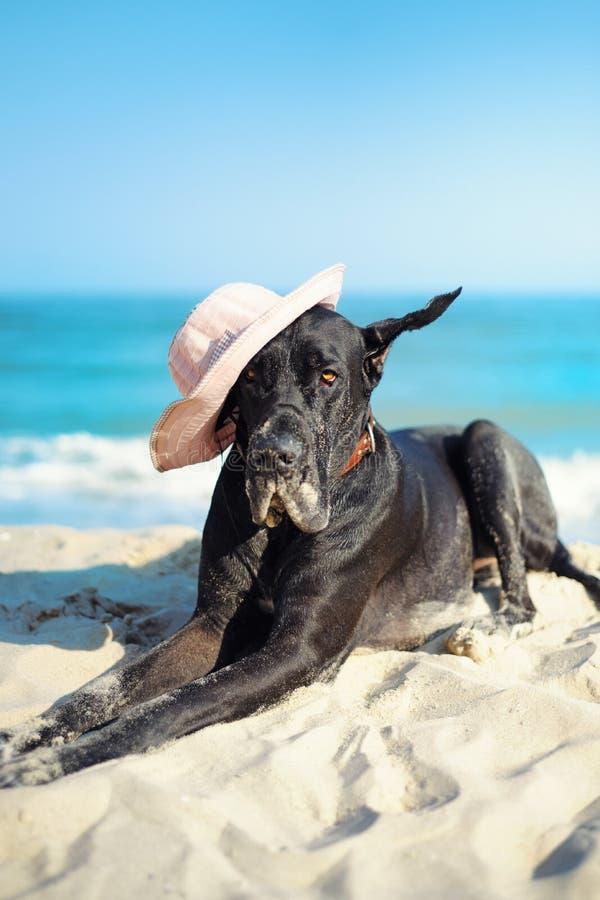 Un grosso cane nero in cappello al mare fotografia stock libera da diritti