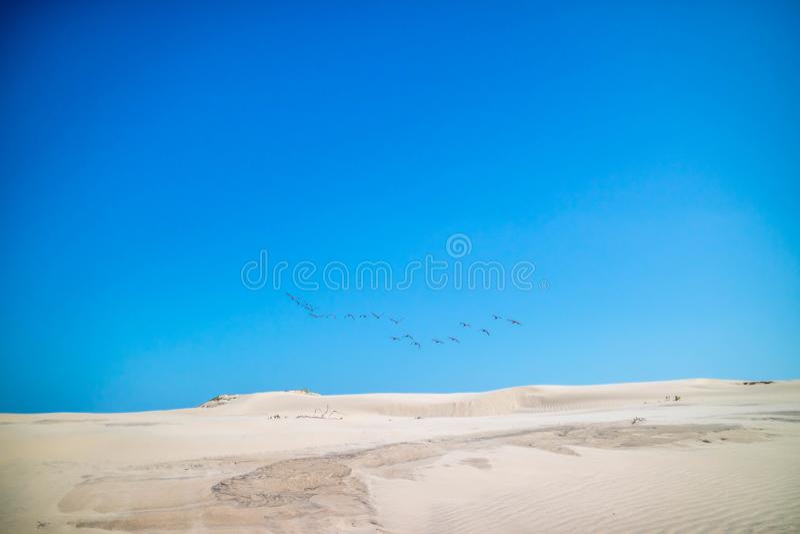 Un groupe apparent d'oiseaux a repéré la migration ensemble en île du sud d'aumônier, le Texas photos libres de droits