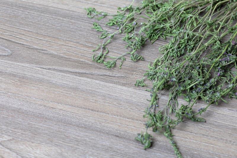 Un groupe d'herbe s?che Jardin de thym photo libre de droits
