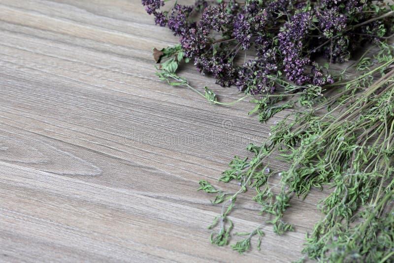 Un groupe d'herbe s?che Jardin de thym image stock