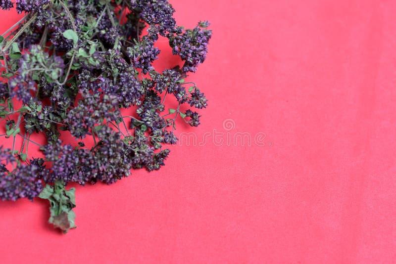 Un groupe d'herbe s?che Jardin de thym Dans la perspective de la couleur de corail photo stock