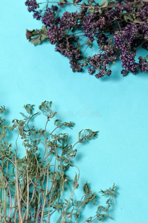 Un groupe d'herbe s?che Jardin de thym Dans la perspective de la couleur en bon état images libres de droits