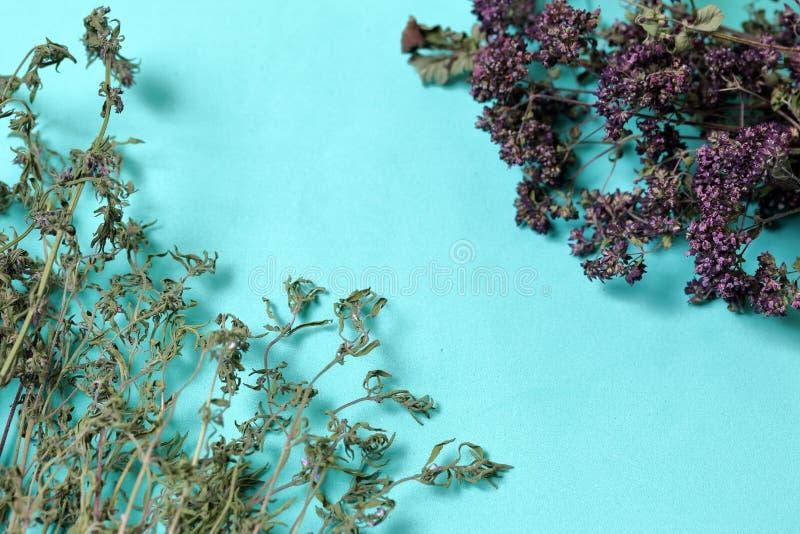 Un groupe d'herbe s?che Jardin de thym Dans la perspective de la couleur en bon état photos libres de droits