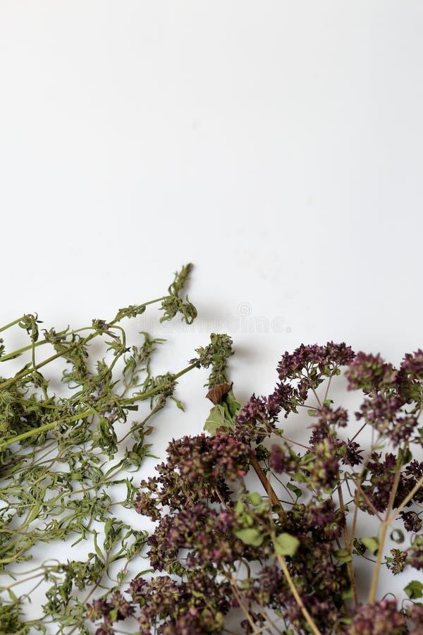 Un groupe d'herbe s?che Jardin de thym Sur un fond blanc photos stock