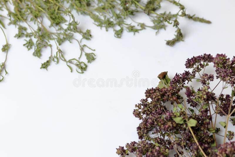 Un groupe d'herbe s?che Jardin de thym Sur un fond blanc image libre de droits