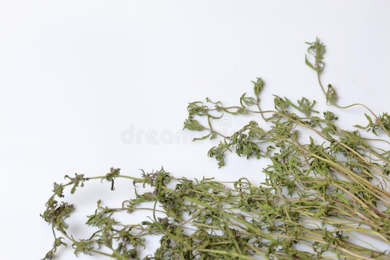Un groupe d'herbe s?che Jardin de thym Sur un fond blanc photo stock