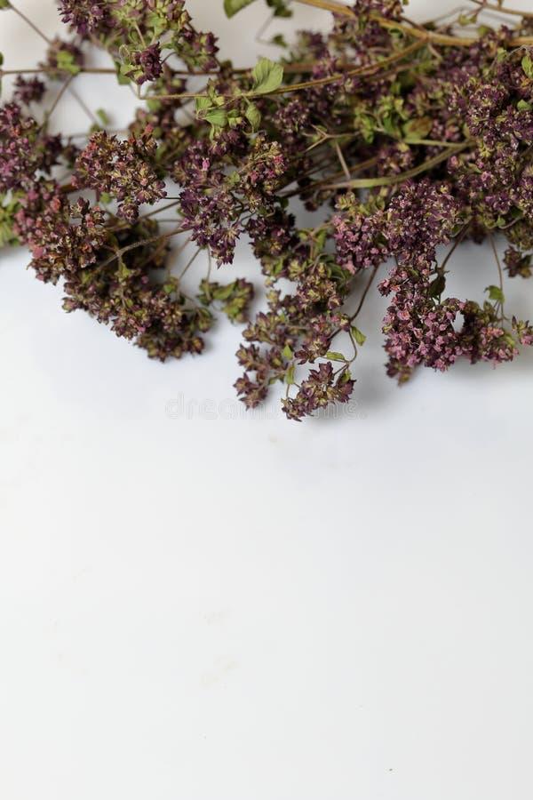 Un groupe d'herbe s?che Jardin de thym Sur un fond blanc photos libres de droits