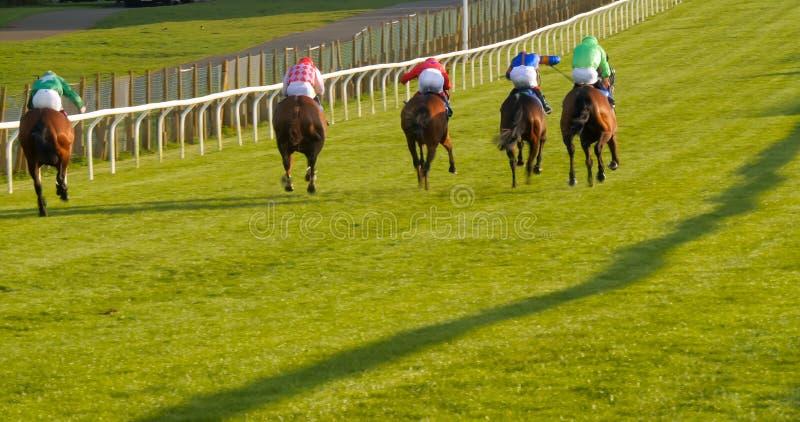 Un groupe de chevaux et de jockeys du dos images stock