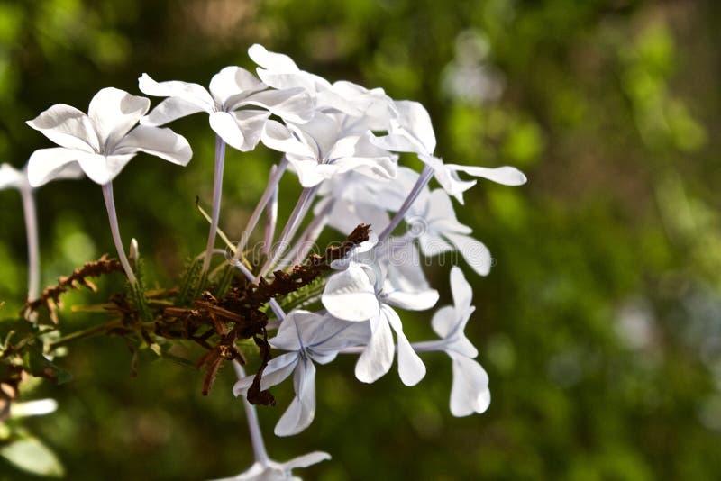 Un groupe de fleurs photos libres de droits