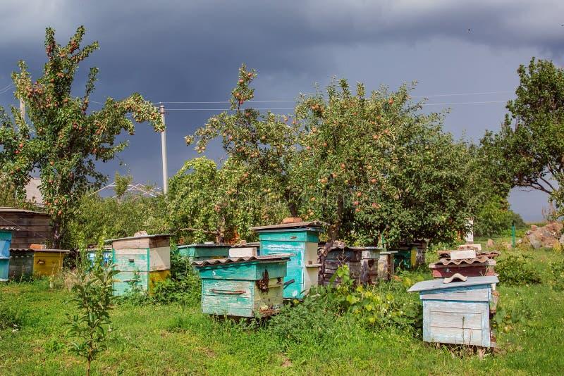 Un groupe de l'essaim des abeilles sur une vieille ruche en bois dans un jardin de ferme Rucher, essaim, abrité du vent et avec u image stock
