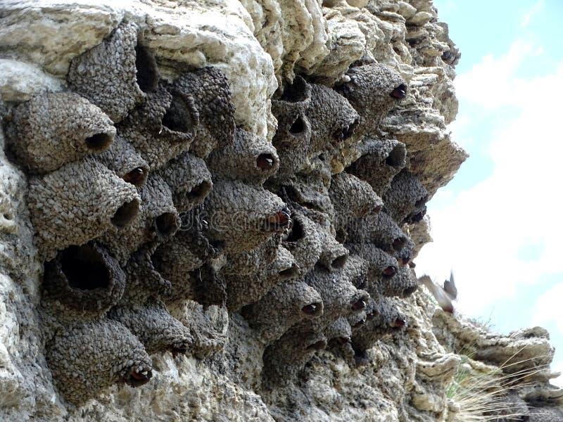 Un groupe de nid d'oiseaux fait à partir de la boue image stock