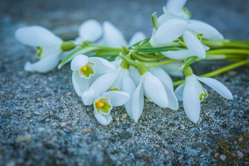 Un groupe de perce-neige blancs image stock