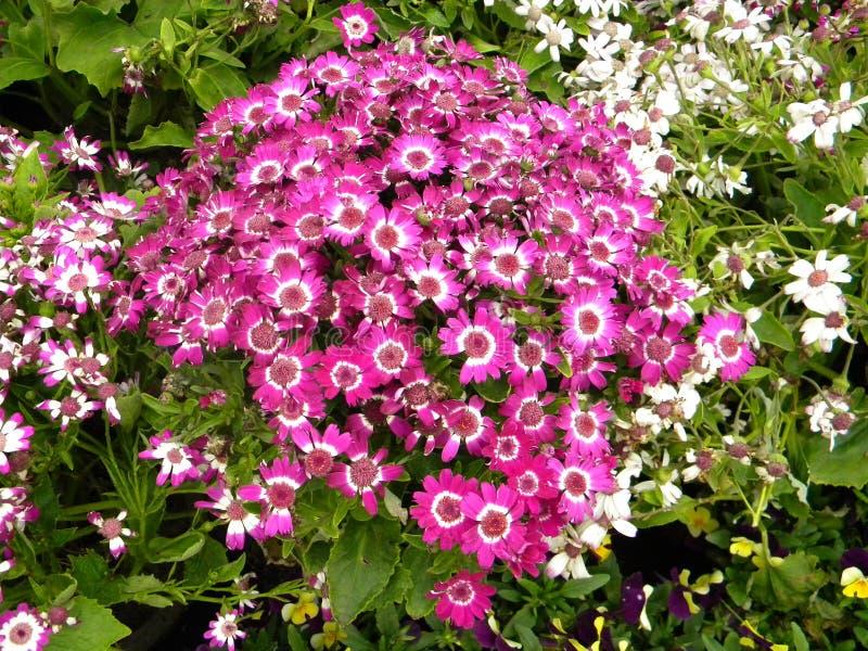 Un groupe de petites fleurs rouges en parc images libres de droits