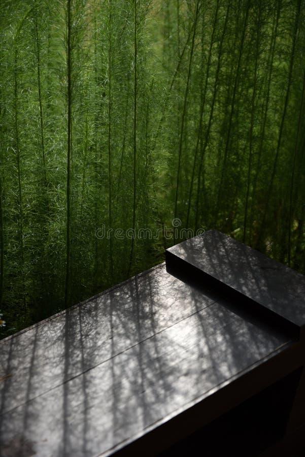 Un groupe de plante verte a jeté une lumière pâle au-dessus du banc brun image libre de droits