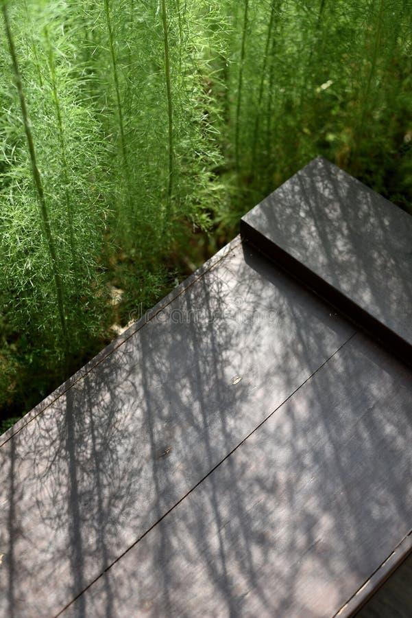 Un groupe de plante verte a jeté une lumière pâle au-dessus du banc brun photo stock
