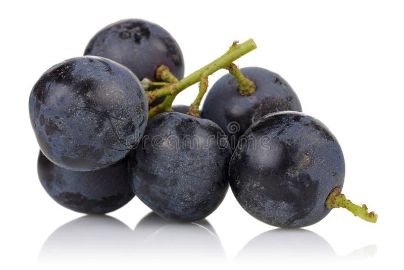 Un groupe de raisins noirs photo libre de droits