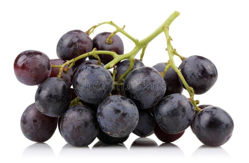 Un groupe de raisins noirs images stock