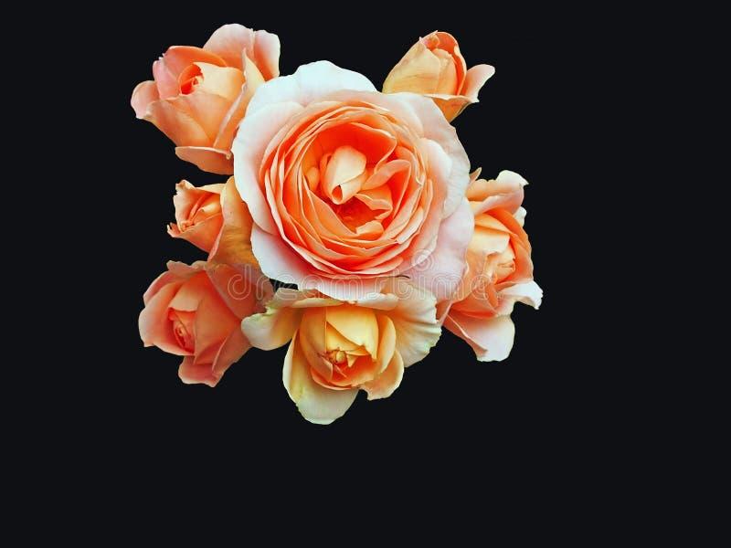 Un groupe de roses d'isolement sur le noir images libres de droits