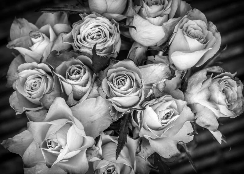 Un groupe de roses en noir et blanc photo stock