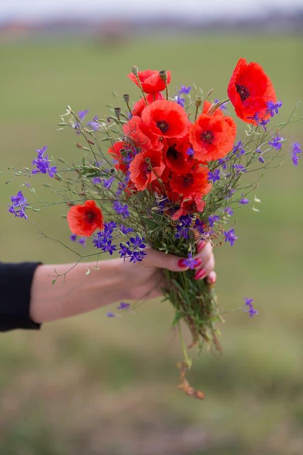 Un groupe gentil de pavots et de champ fleurit images stock