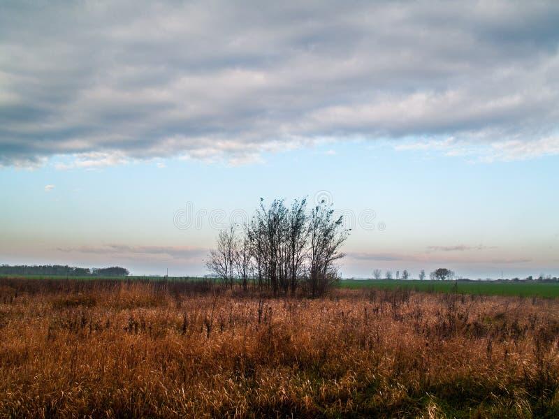 Un grupo de árboles con el cielo azul y de couds cerca del bolna del ¡de TiszabÃ, Hungría fotografía de archivo