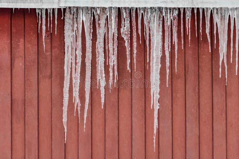 Un grupo de carámbanos transparentes blancos y rojos agudos está colgando abajo del tejado de un edificio rojo en invierno imágenes de archivo libres de regalías