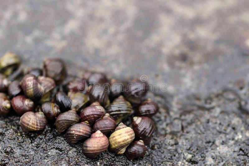 Un grupo de caracoles foto de archivo libre de regalías