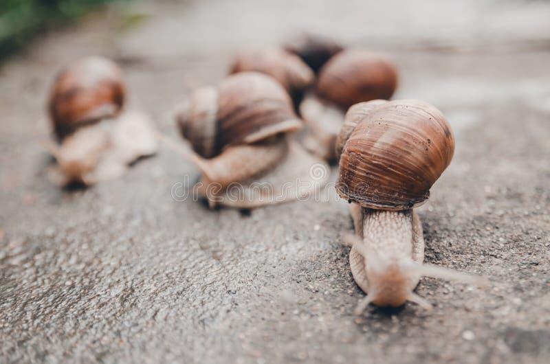Un grupo de caracoles al aire libre en la tierra fotos de archivo
