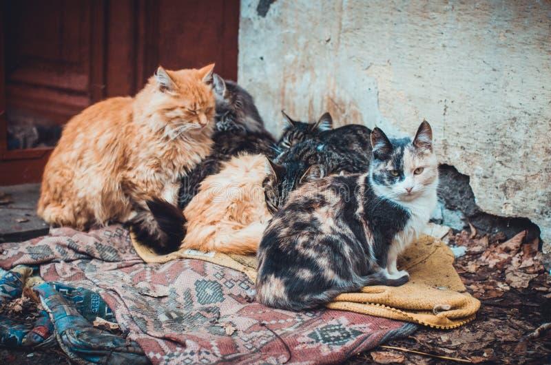 Un grupo de muchos gatos perdidos que mienten en la alfombra sucia en la calle fría al aire libre imagen de archivo