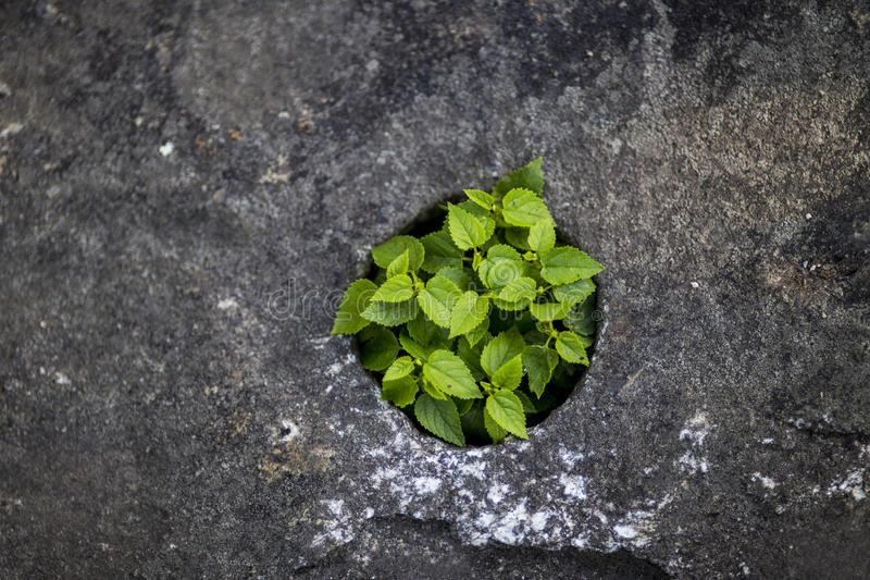Un grupo de poca vida verde en rocas fotos de archivo libres de regalías