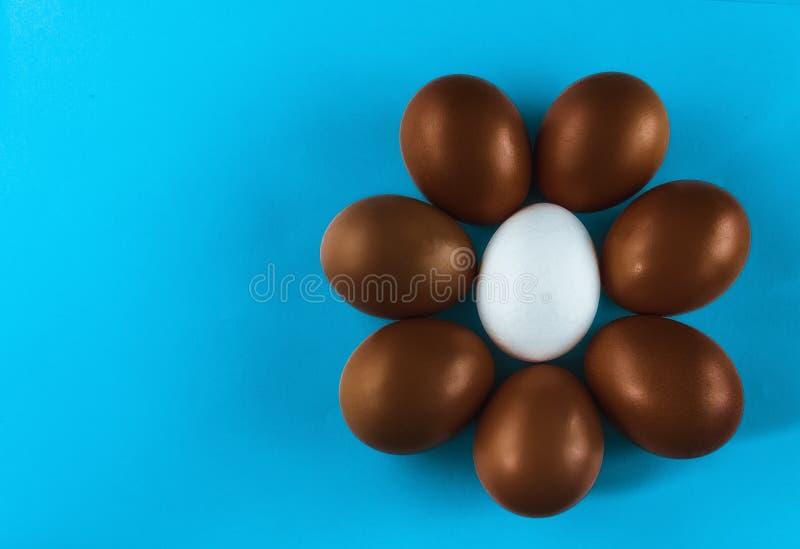 Un grupo de siete huevos de chocolate y un blanco, círculo-formado o flor miente en un fondo azul, visión superior copie el espac imagen de archivo