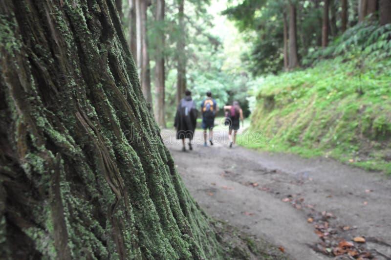 Un grupo de tres personas que caminan a través del bosque imagen de archivo