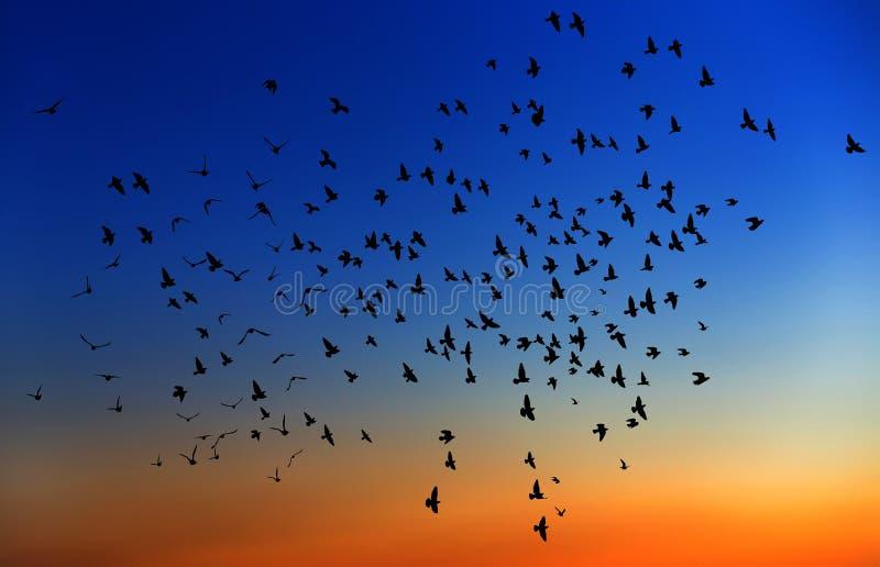Un grupo grande de pájaros. imagenes de archivo
