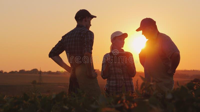 Un gruppo di agricoltori sta discutendo nel campo, facendo uso di una compressa Due uomini ed una donna Lavoro di gruppo nel comm immagini stock