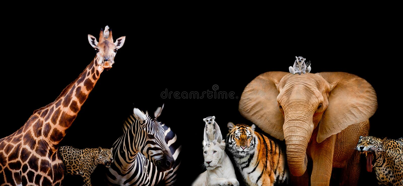 Un gruppo di animali è insieme su un fondo nero con testo fotografia stock