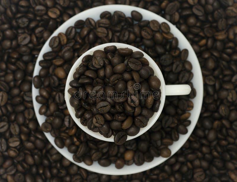 Un gruppo di chicchi di caffè in tazza e piattino con i fagioli nei precedenti immagine stock