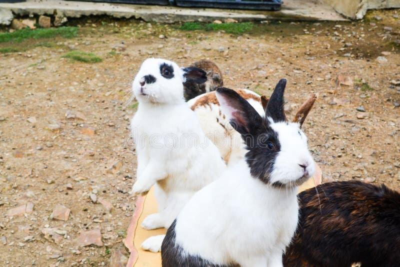 Un gruppo di coniglio nel giardino immagini stock