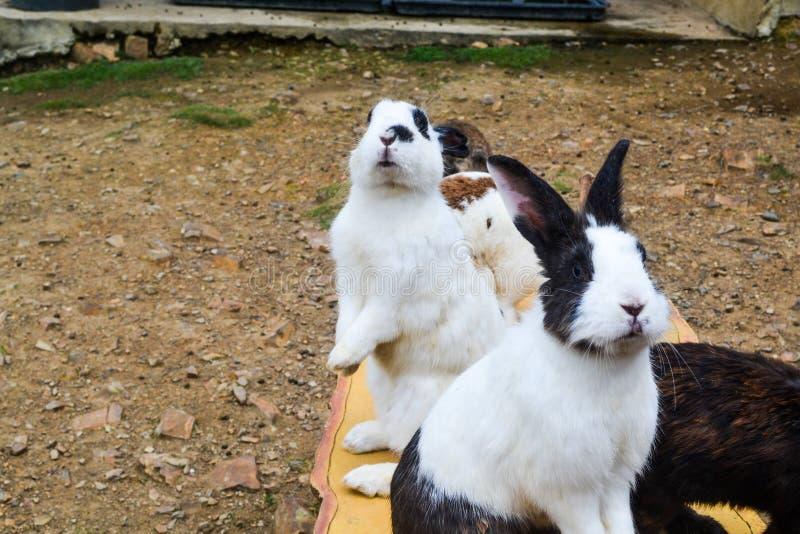 Un gruppo di coniglio nel giardino immagine stock libera da diritti