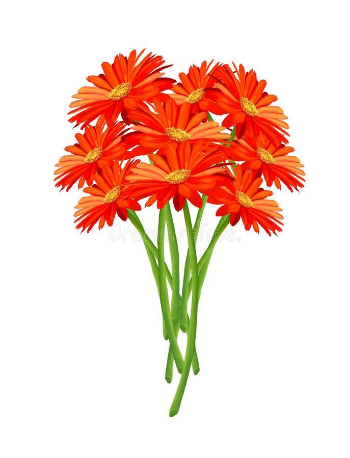 Un gruppo di fiori arancioni freschi del Gerbera illustrazione di stock