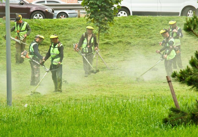 Un gruppo di lavoratori municipali pubblici in uniformi verde chiaro e di maschere che falciano erba in un parco con le falciatri fotografia stock libera da diritti