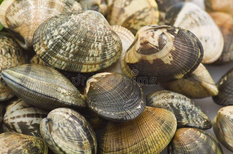 Un gruppo di molluschi immagine stock