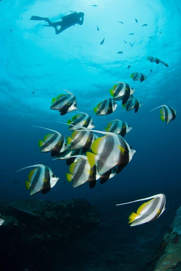 Un gruppo di pesce dell'insegna è baia di Sodwana fotografie stock libere da diritti