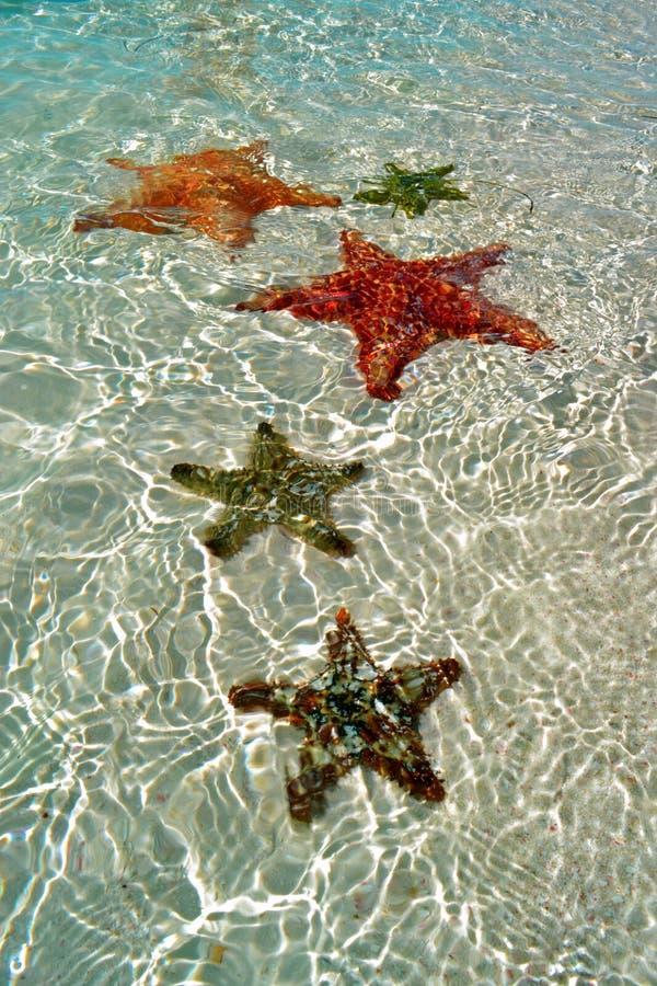 Un gruppo di stelle marine sott'acqua su una spiaggia di sandy fotografia stock